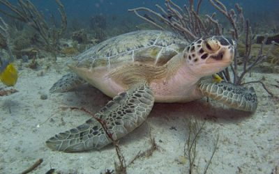 Florida Sea Turtle Protection Lighting Ordinance Guide
